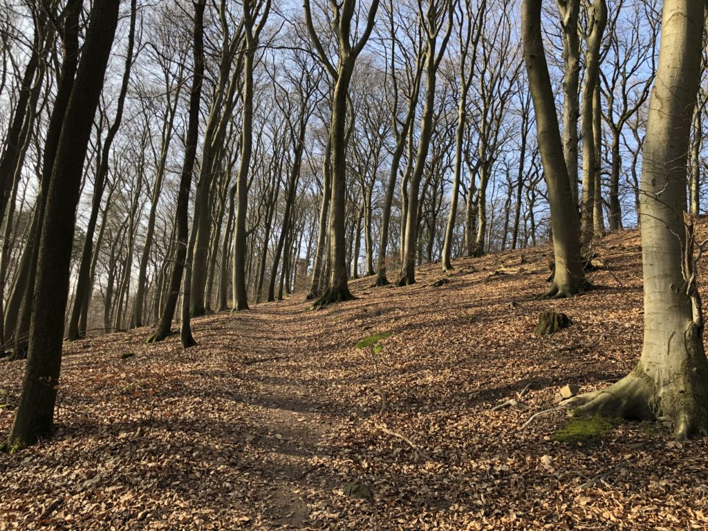 Auf den Spuren des Heidelbär - Mit dem Wohnmobil nach Heidelberg 5