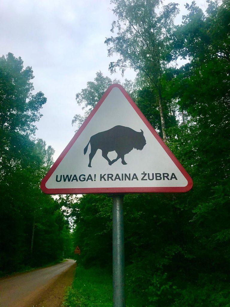 Vorsicht Bison